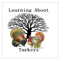 learning about turkeys