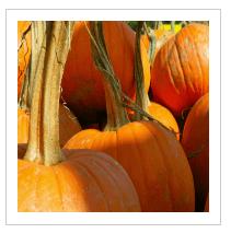 sorting pumpkins